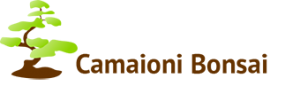 Camaioni Bonsai